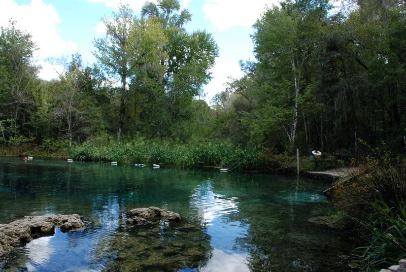 The springs 009
