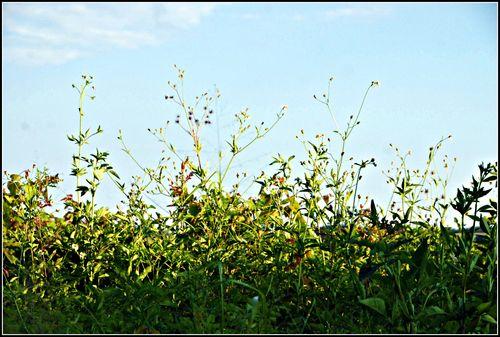 Weeds 005