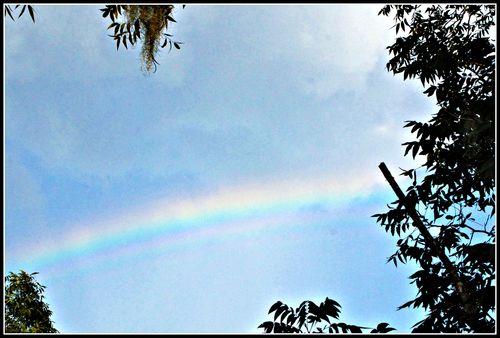 Rainbow 031