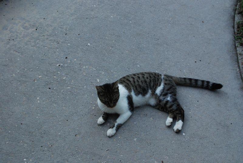 Cats 006