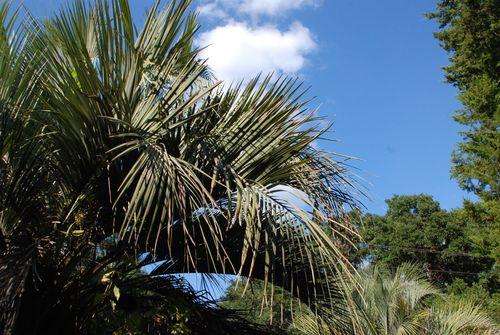 Palm 011