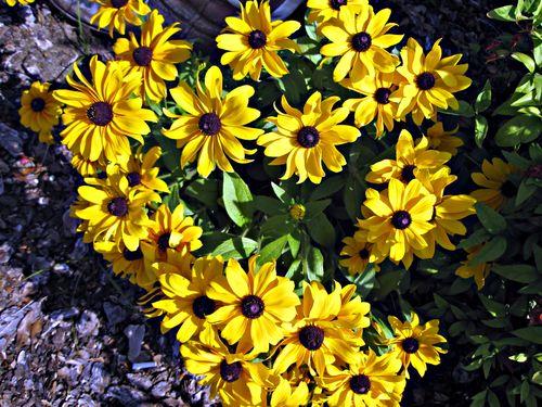Flowers 008_picnik