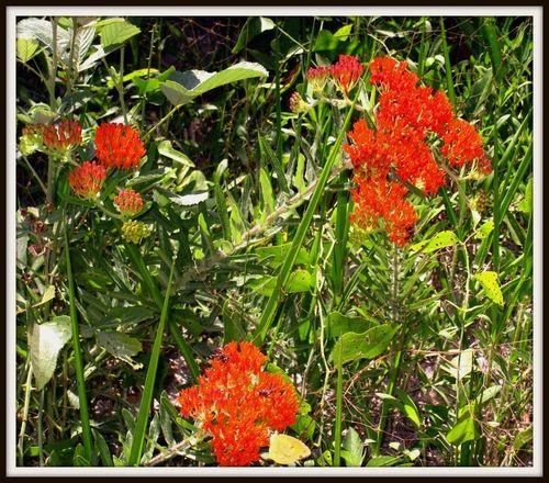 Butterfly plant 008_picnik