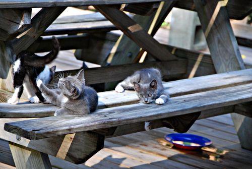 Kittens 002_picnik