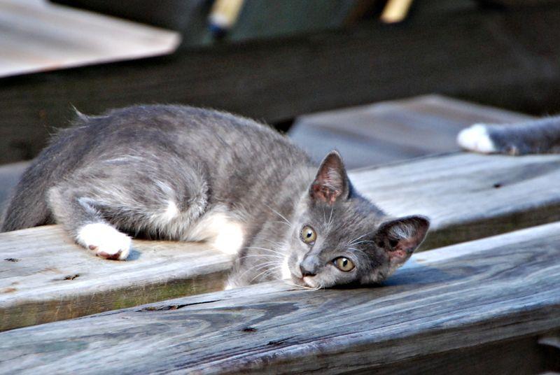 Kittens 004