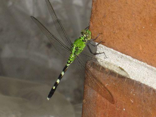 Dragonfly 007