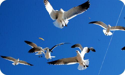 Sea gulls 020