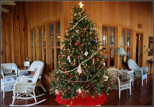 Christmas tree 2011 001