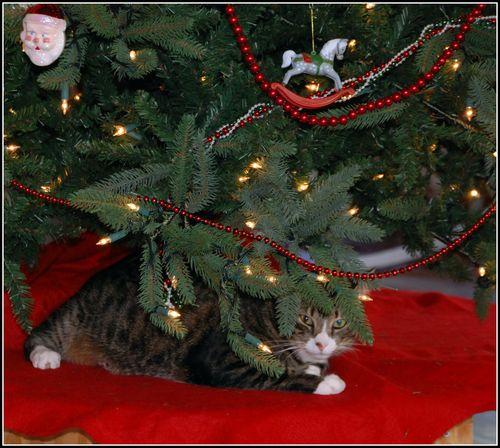 Christmas tree 2011 003