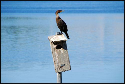 Bird 012