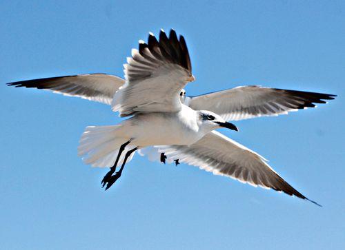 Seagulls 018_picnik