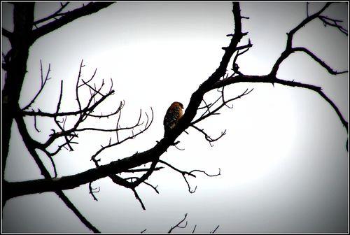 Vultures 020