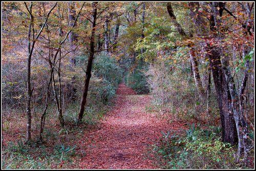 Nov. walk 036