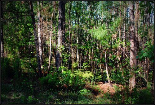 Cottonwood 004