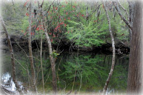 Spring green 005