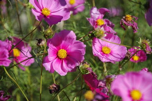 NORTH CAROLINA FLOWERS 10-12-07 002
