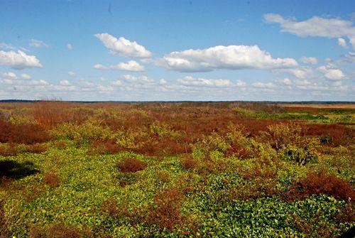 Prairie 001