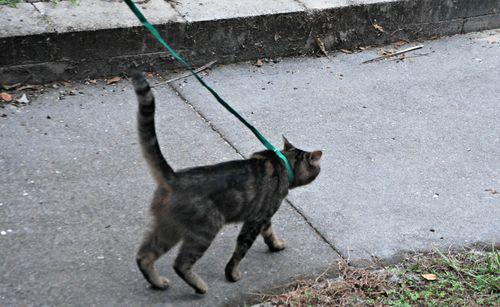 Cat 008