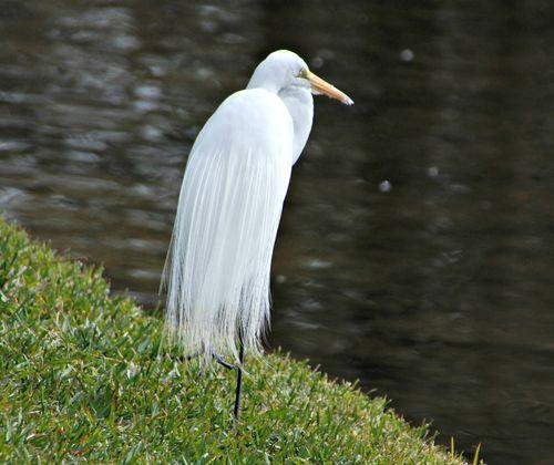 Duck pond 042
