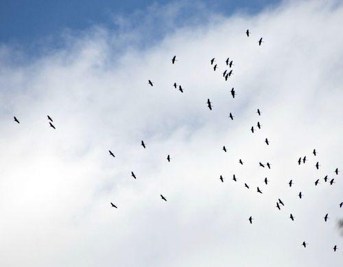Cranes 001