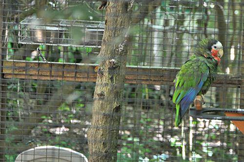 Zoo 052