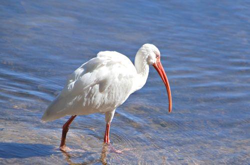 Duck pond 026