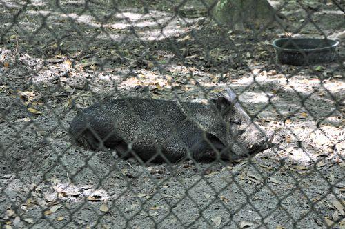Zoo 030