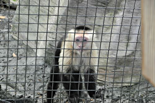 Zoo 068