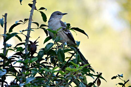 Birds 001