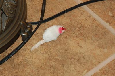 Micecatyard2007_020