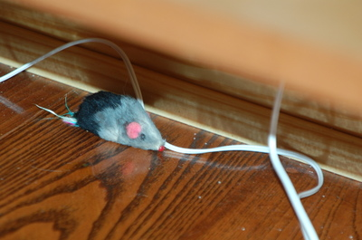 Micecatyard2007_021